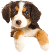 Power Pet Sitter Login