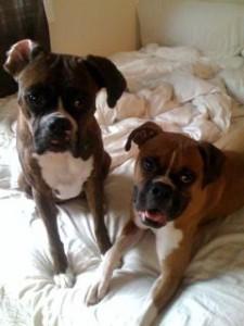 Luca and Deuce