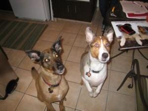 Reggie and Sadie