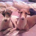 Shea and Charlie