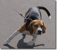 dogpull
