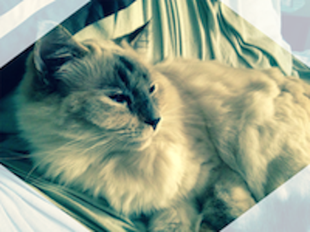 vitamin d for cats