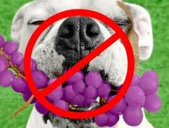 doggrapes