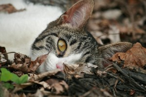 Hiding in the leaves
