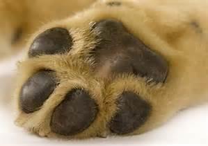 dogpaw